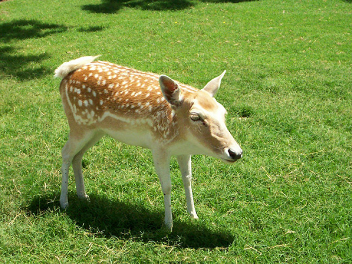 deer-without-necks-2