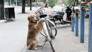 amazing-video-dog-guards-owners-bicycle-with-L-0yCtW5