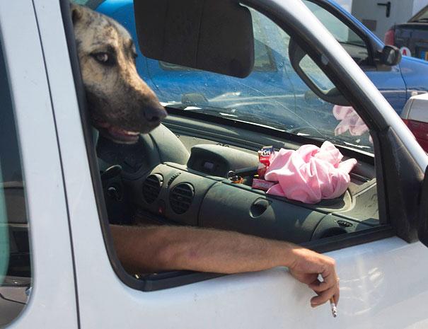 pefectly-timed-dog-photos-65 (1)