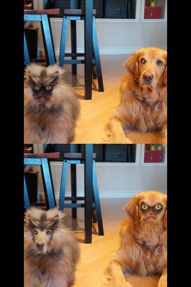 best-face-swap-i-think-i-have-ever-seen