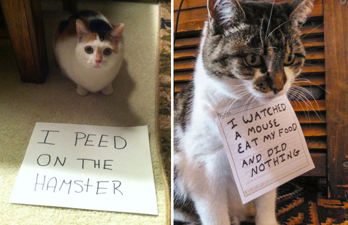 cat-shaming-coverimage